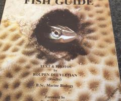Bok Red sea fish guide