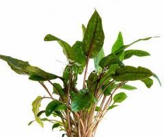 Växtpaket